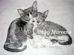Black and White Pencil Cat Drawings